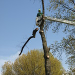 Tree trimming, tree removal, hedge trimming, hedge removal, stump removal, chipping service, pruning, storm work, emergency storm services (including 24/7 phone line, tarping, and priority removals) bucket truck service, snow removal, and salt spreading.